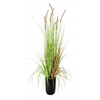 EUROPALMS Fountain grass, 120cm