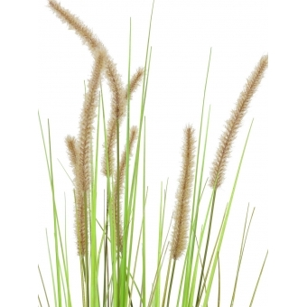 EUROPALMS Fountain grass, 120cm #2