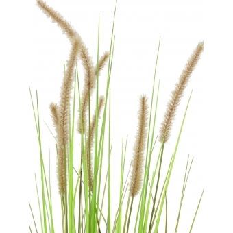 EUROPALMS Fountain grass, 120cm #2