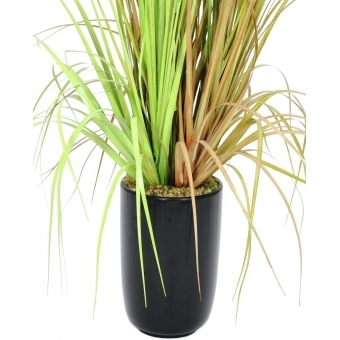 EUROPALMS Fountain grass, 120cm #3