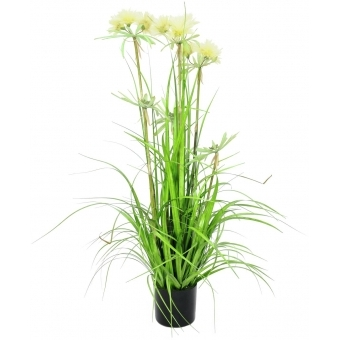 EUROPALMS Star grass, 120cm