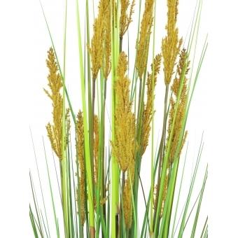 EUROPALMS Parrot grass, 120cm #2