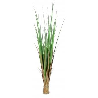 EUROPALMS Fox grass, 120cm