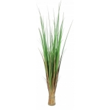 EUROPALMS Fox grass, 120cm