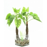 EUROPALMS Pothos in glass, 50cm