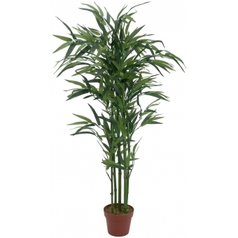EUROPALMS Bamboo, 120cm