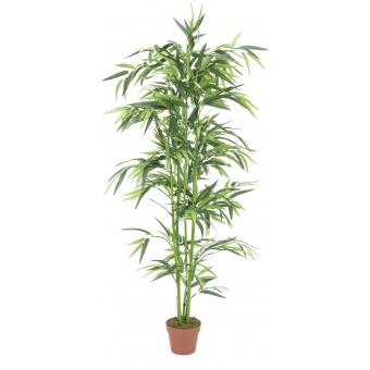 EUROPALMS Bamboo, 150cm
