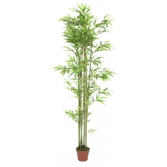 EUROPALMS Bamboo, 180cm