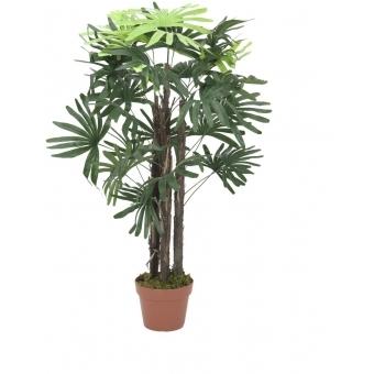 EUROPALMS Rhaphis palm, 90cm