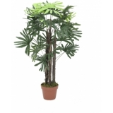 EUROPALMS Rhaphis palm, 90cm