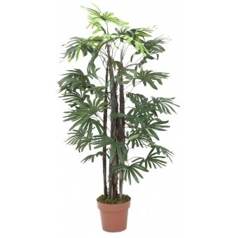 EUROPALMS Rhaphis palm, 120cm