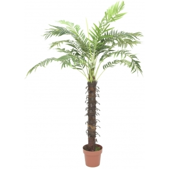 EUROPALMS Coconut palm with 18 leaves, 160cm
