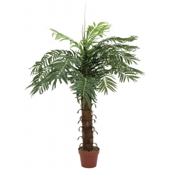 EUROPALMS Coconut palm with 15 leaves, 120cm