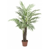 EUROPALMS Phoenix palm tree, 120cm