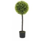 EUROPALMS Boxwood Tree, 90cm