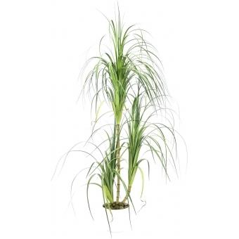 EUROPALMS Dracena bush, 160cm
