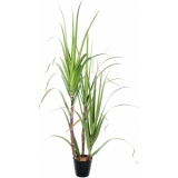 EUROPALMS Sugar Cane Set, 170cm