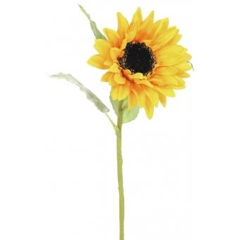 EUROPALMS Sunflower, 70cm #2