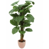 EUROPALMS Giant pothos plant, green-yellow, 150cm