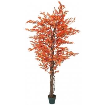 EUROPALMS Ficus tree multi-trunk, orange, 180cm