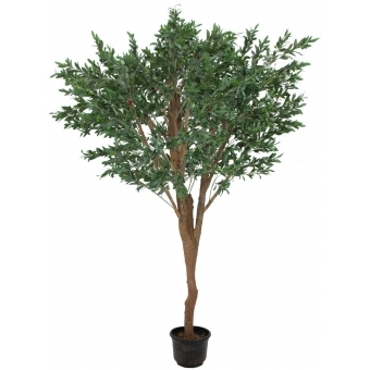 EUROPALMS Giant Olive tree, 250cm