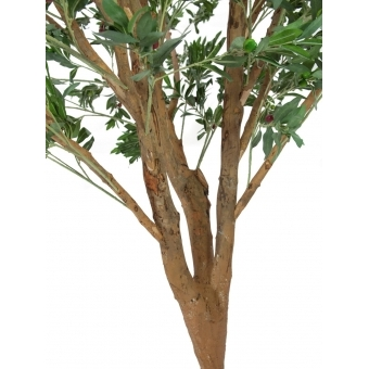 EUROPALMS Giant Olive tree, 250cm #2