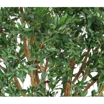 EUROPALMS Giant Olive tree, 250cm #3