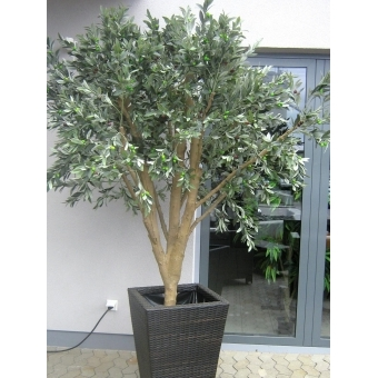 EUROPALMS Giant Olive tree, 250cm #4