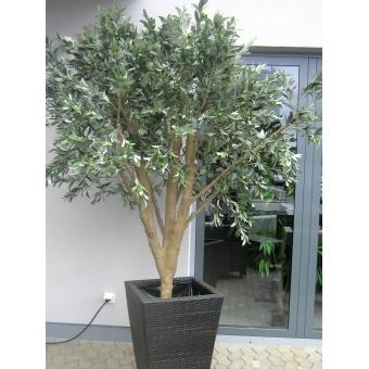 EUROPALMS Giant Olive tree, 250cm #4