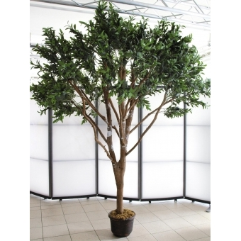 EUROPALMS Giant Olive tree, 250cm #5