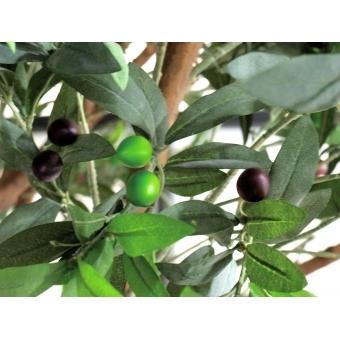 EUROPALMS Giant Olive tree, 250cm #8
