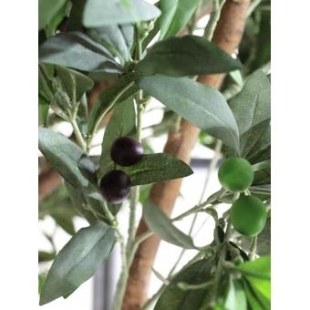 EUROPALMS Giant Olive tree, 250cm #9
