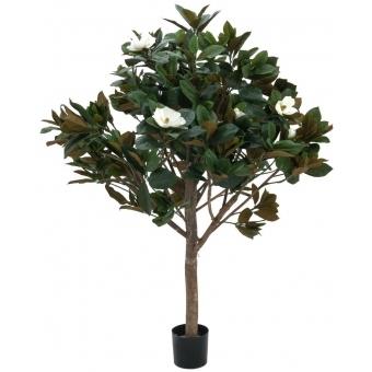 EUROPALMS Magnolia tree, 150cm