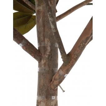 EUROPALMS Magnolia tree, 150cm #3