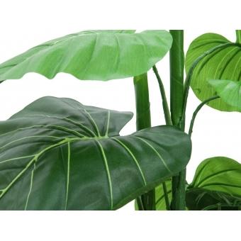 EUROPALMS Caladium plant, 90cm #3