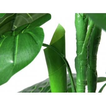 EUROPALMS Caladium plant, 90cm #4