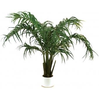 EUROPALMS Coconut bush, 230cm
