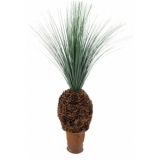 EUROPALMS Rain grass palm with nodule trunk, 90cm