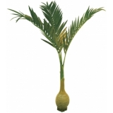EUROPALMS Phoenix palm with bottle trunk, 300cm