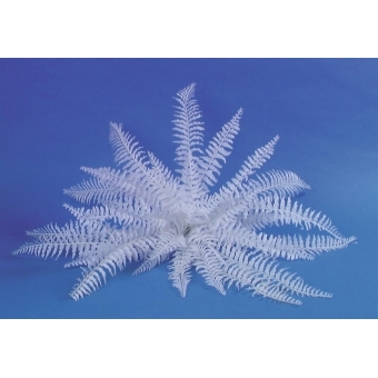 EUROPALMS White boston fern, 60cm #2